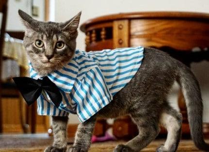 Dusty, the cat of staff member Esraa Aburass