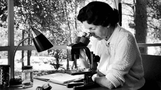 6 Women Pioneers of Ocean Exploration - Rachel Carson